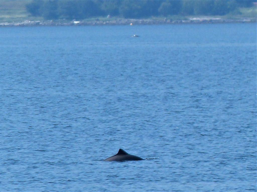 Besuch von Delfinen beim Frühstück am Atlantik